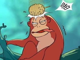 """红毛猩猩:悄悄告诉你,我是人类的""""远方亲戚"""""""